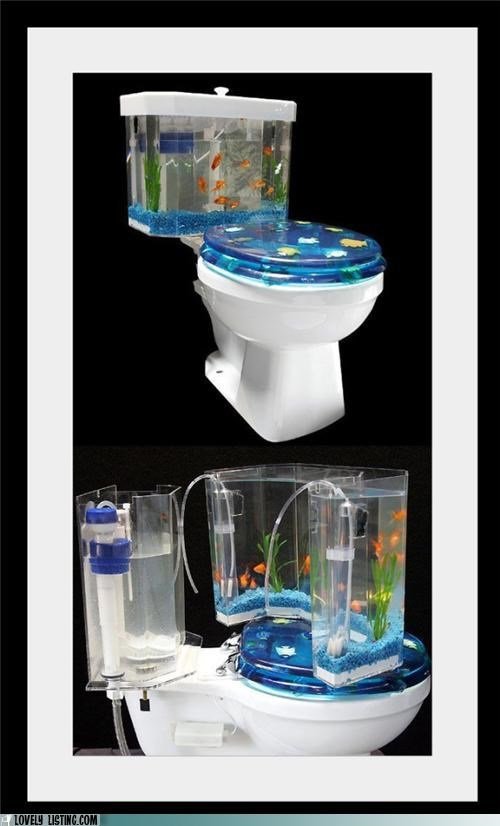 fish goldfish tank toilet - 4934151936