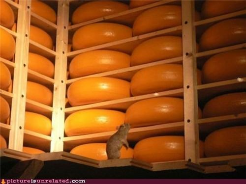 cheese heaven mouse wtf - 4934209024