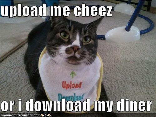 Cheezburger Image 4935100672