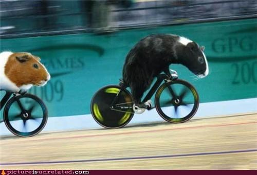 bicycles,gerbils,race,wtf
