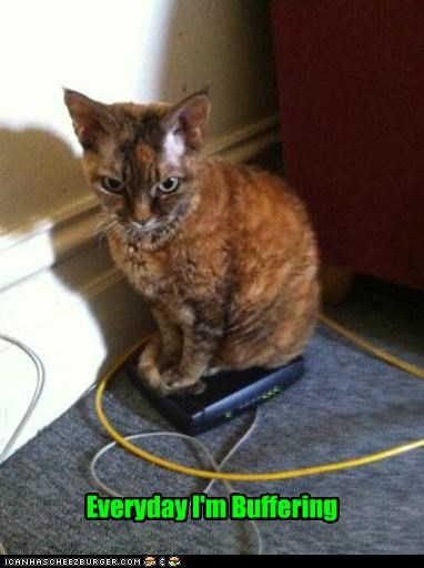 buffering caption captioned cat everyday pun rick ross router sitting song - 4936491776
