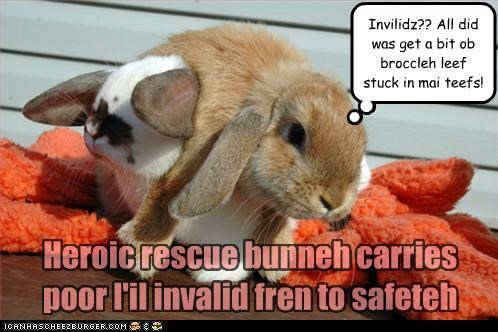 Heroic rescue bunneh carries poor l'il invalid fren to safeteh Invilidz?? All did was get a bit ob broccleh leef stuck in mai teefs!