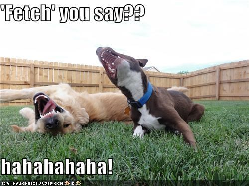 fetch friends funny golden retriever laughing outdoors pitbull - 4937089536