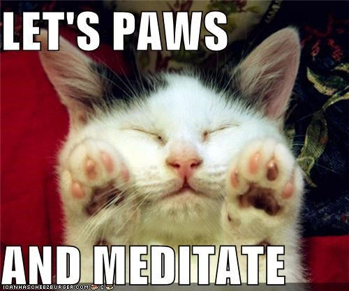 caption captioned cat lets meditate pause paws pun sleeping - 4937564672