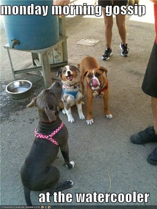 border collie friends gossip mixed breed pitbull water cooler - 4937618432