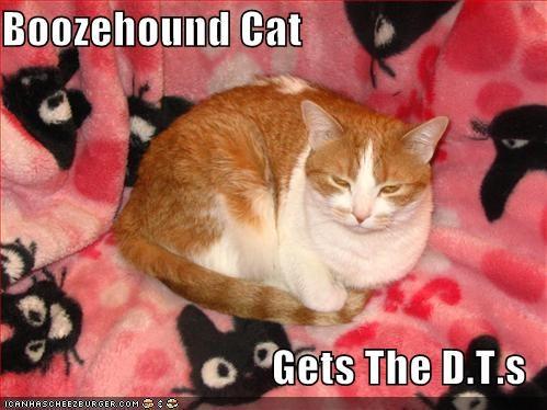 Boozehound Cat Gets The Dts Cheezburger Funny Memes Funny