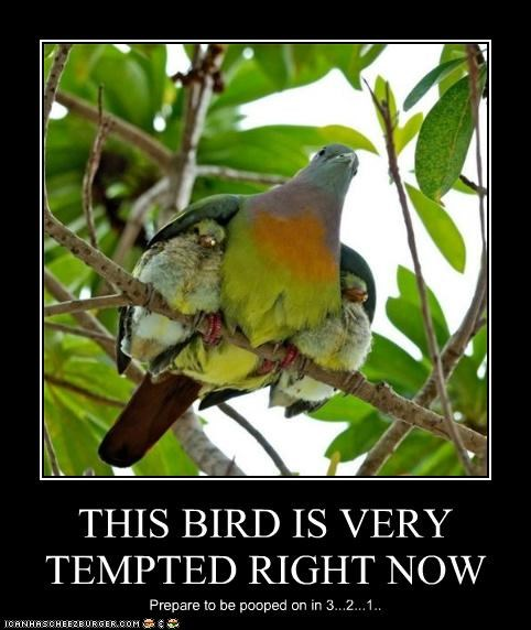 THIS BIRD IS VERY TEMPTED RIGHT NOW Prepare to be pooped on in 3...2...1..
