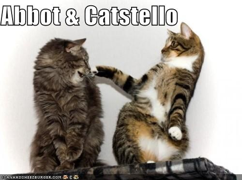 abbot and costello,bickering,caption,captioned,cat,Cats,comedy,slapstick