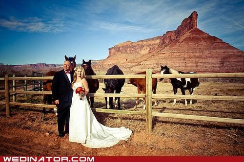 bride,funny wedding photos,groom,horses,photobomb