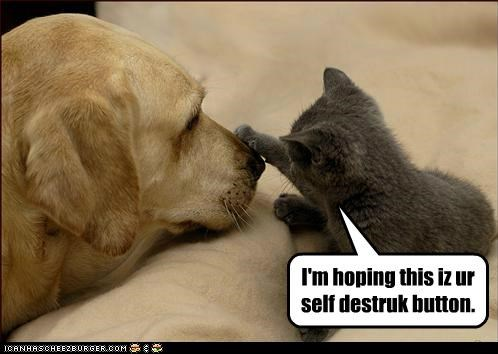 button caption captioned cat dogs hope kitten nose pressing self destruct - 4939298304