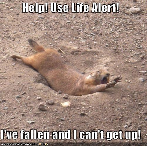 help use life alert i ve fallen and i can t get up i can has