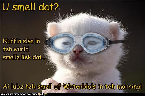 U smell dat? Nuffin else in teh wurld smellz liek dat... Ai lubz teh smell of Waterblols in teh morning!