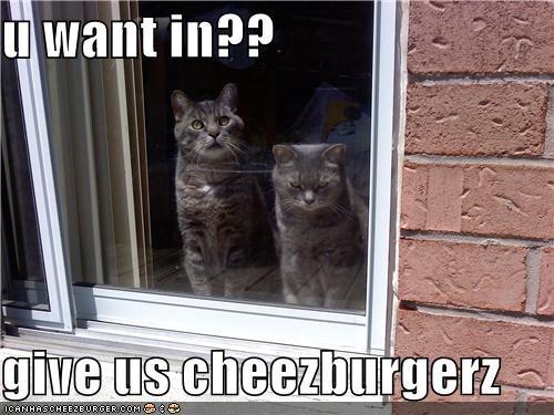 Cheezburger Image 4939471104