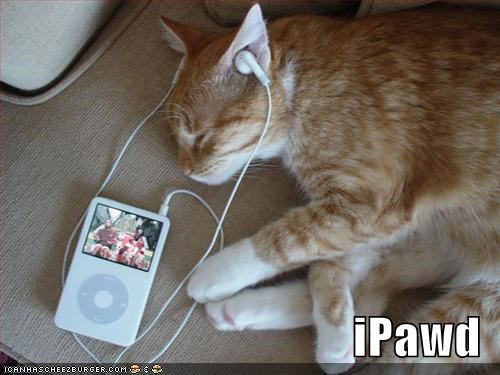 ipods lolcats Music orange sleeping - 494053120