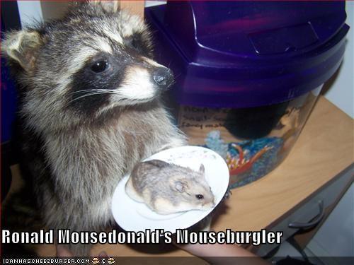 Cheezburger Image 4941101056