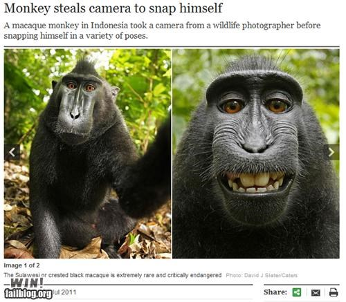 animal completely relevant news monkey phtograph zoo