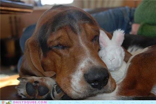 adopted,basset hound,cute,dogs,manipulative,reader squees,stray,unfair