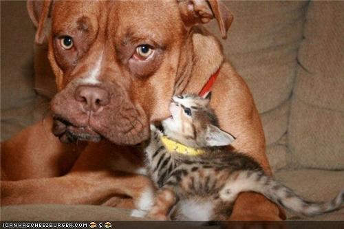 annoyed,bite,dogs,facelift,goggies,goggies r owr friends,Interspecies Love,kitten