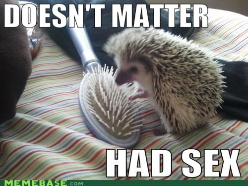 akon brush comb hedgehog Lonely Island Memes sex - 4941646336