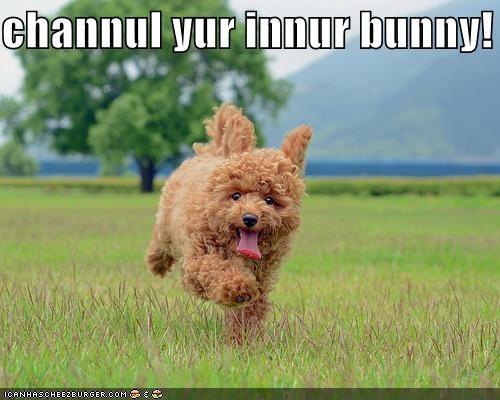 happy outdoors running spanish water dog tongue - 4941826048