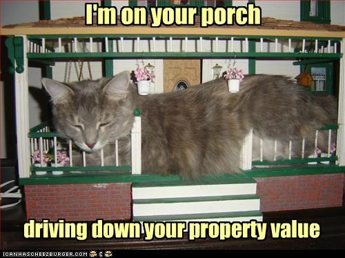 caption captioned cat down driving house kitten model on porch property sleeping value