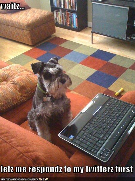 computer couch schnauzer twitter - 4941892096