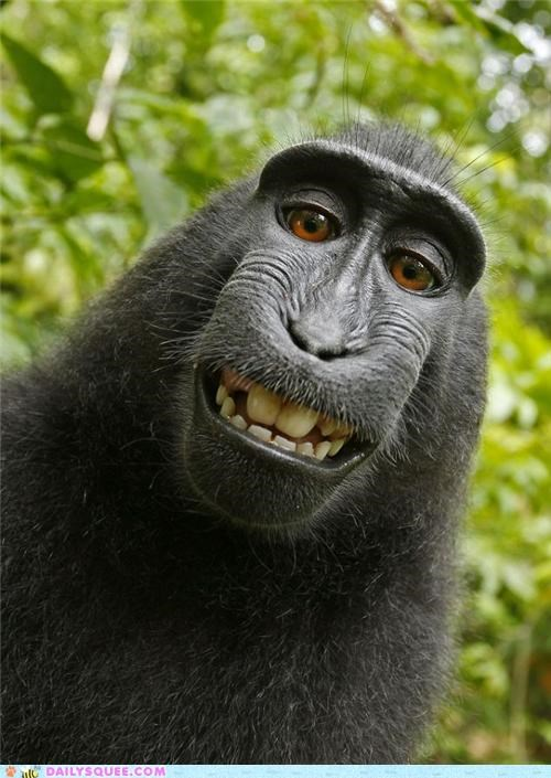 acting like animals,camera,crested black macaque,DIY,do it yourself,Hall of Fame,hilarious,macaque,photography,self portrait,stolen