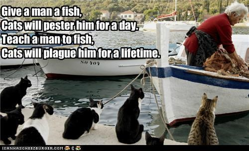 caption captioned cat Cats duration fish fishing lifetime period plague saying time truth wisdom - 4942258944