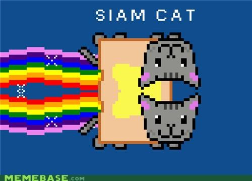 bread Cats Nyan Cat rainbow siamese toast - 4942490112