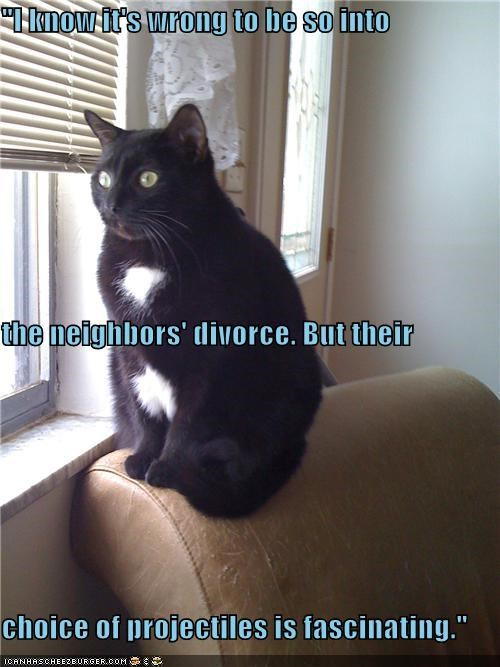 caption captioned cat choice divorce explanation fascinated fascinating projectiles reason watching wrong - 4942641664