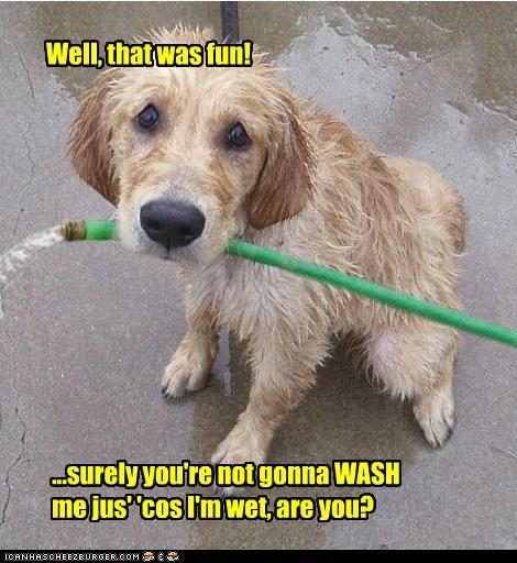 Well, that was fun! ...surely you're not gonna WASH me jus' 'cos I'm wet, are you?