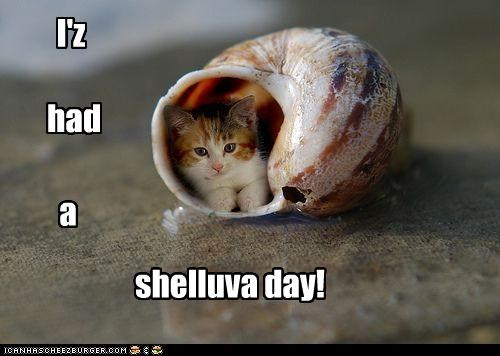 caption,captioned,cat,helluva,kitten,pun,shell,similar sounding