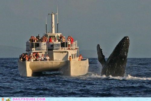 acting like animals crowd cruise hello humans socializing waving whale yacht