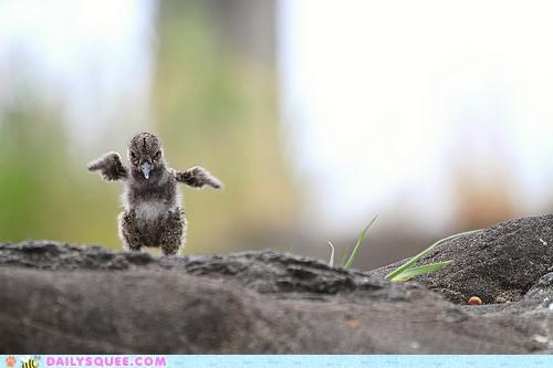 baby bird do want flight flying jump jumping limit oystercatcher practice sky trying - 4943654400