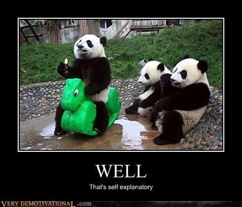 animals hilarious panda wtf - 4943685632