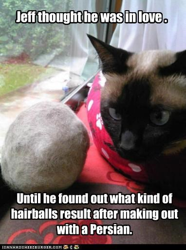 caption,captioned,cat,discovery,hairball,hairballs,love,making out,persian,result,siamese,thought