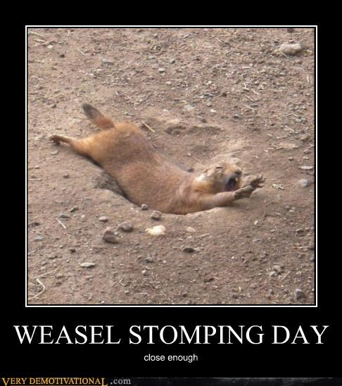 weasel holiday stomping funny - 4943816704