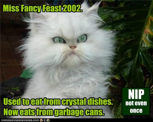 Miss Fancy Feast 2002. g NIP Used to eat from crystal dishes. Now eats from garbage cans. not even once