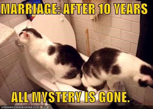 after all bathroom caption captioned cat Cats gone marriage mystery ten toilet years - 4944127488