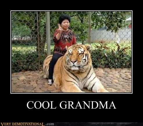 animals cool grandma Pure Awesome tiger wtf - 4944496640