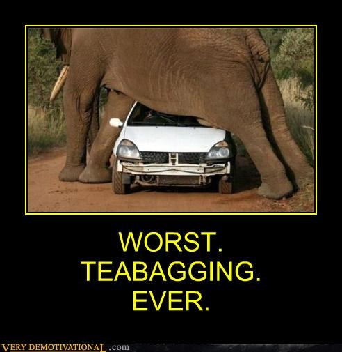 animals car elephant eww teabagging Terrifying