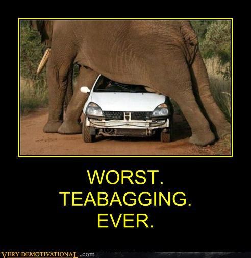 animals car elephant eww teabagging Terrifying - 4945216256