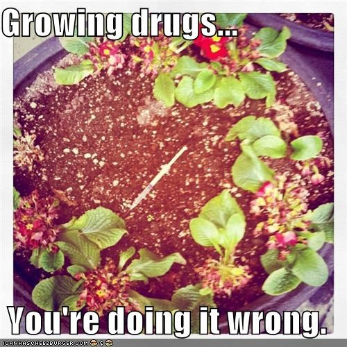 hipsterlulz needle plants pot wtf - 4945442048