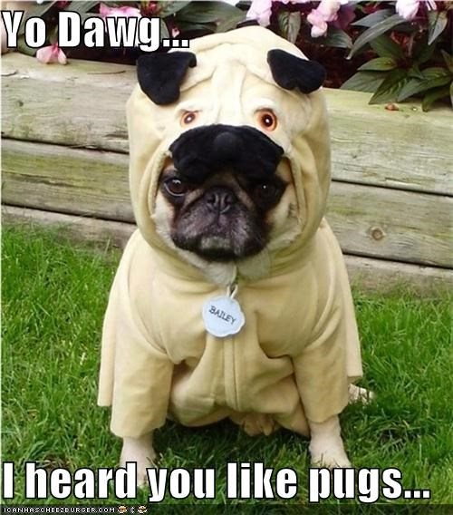 costume,Inception,metapug,pug,pugception,unhappy,yo dawg