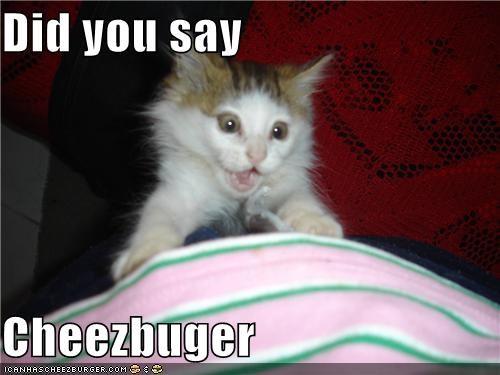 Cheezburger Image 4946493184