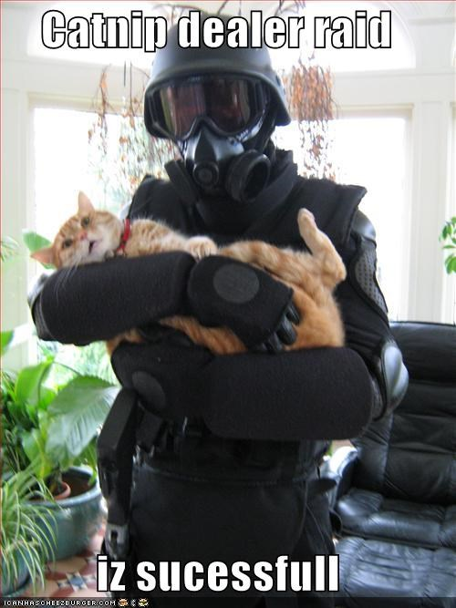 armor caption captioned cat catnip dealer raid successful surprised swat team tabby