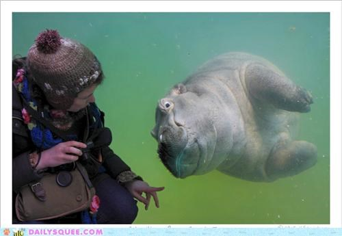 baby fascinated fascinating finger hippo hippopotamus squee spree swimming