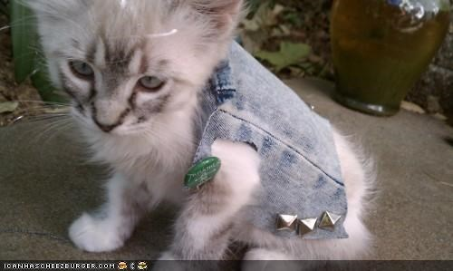 clothing,cyoot kitteh of teh day,denim,dressed up,jacket,punk