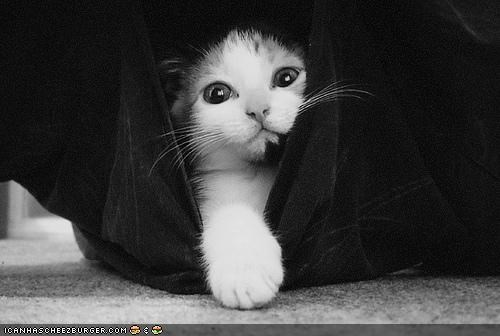black and white,cyoot kitteh of teh day,hiding,surprise