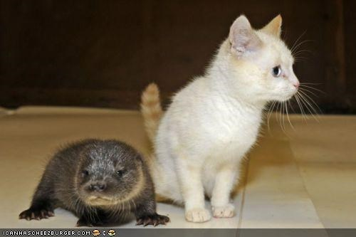 confused cyoot kitteh of teh day friends Interspecies Love otters - 4947138048